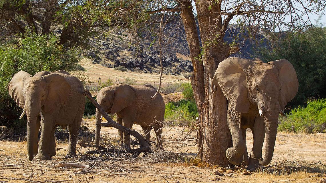 csm_elephants_in_the_huab_river_damaraland_namibia_b5033e0f03 (1)
