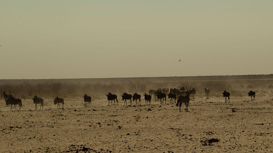 Western-Etosha