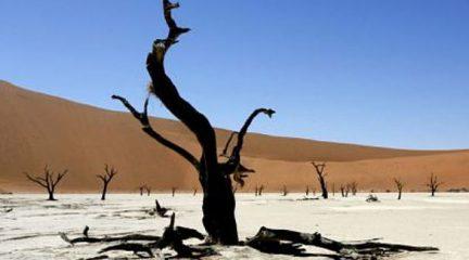 20-Day combined Namibia and Botswana Safari